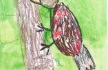 Lietuvos paukščiai vaikų akimis